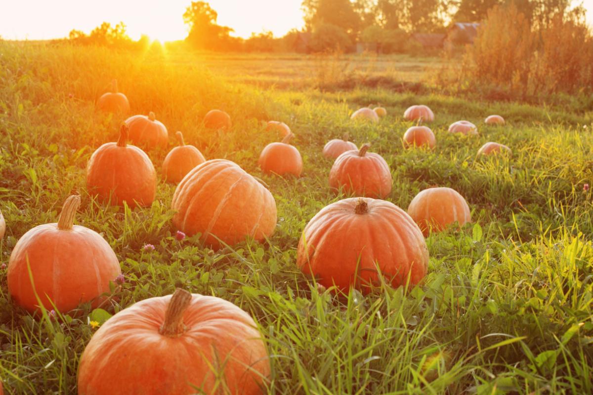 Beautiful Pumpkin